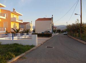 Συγκρότημα προς πώληση Μαραθιάς (Ευπάλιο) 504 τ.μ. Ισόγειο 12 Υπνοδωμάτια Νεόδμητο 3η φωτογραφία