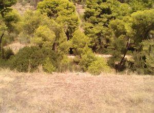 Sale, Land Plot, Korinthos (Corinthia)