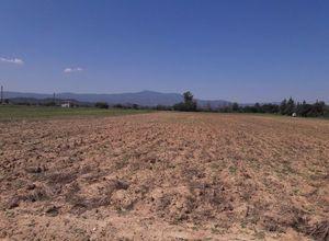 Farm parcel for sale Lagkadikia (Koroneia) 8,000 m<sup>2</sup>