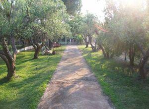 Rent, Detached House, Nikiti (Sithonia)