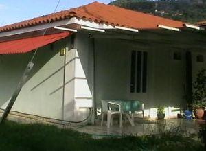 Διαμέρισμα για ενοικίαση Αρκάδι 45 τ.μ. Ισόγειο